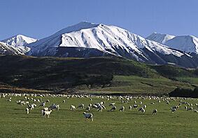 Skiing New Zealand